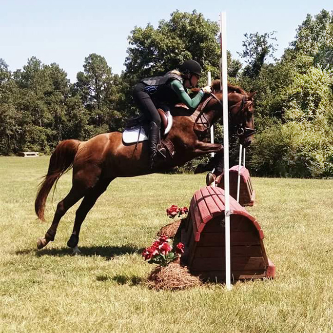 Horse Jumping Rock Hill